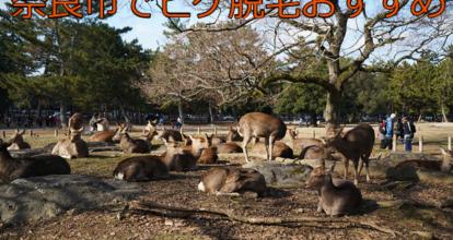 公園にいる鹿